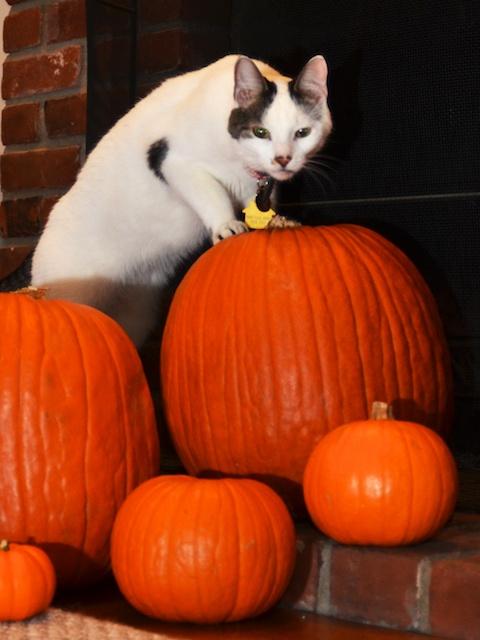Spooky Barn Cat