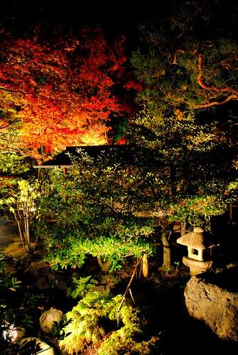 Shirotori Fall Lightup 018r