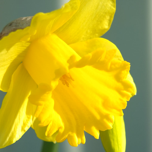 Spring ray of sunshine by Patricia Manhire