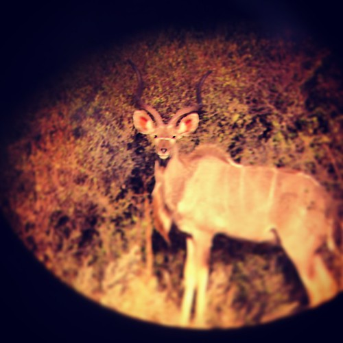 Kudu #Botswana #Africa #travel #desert #TagsForLikes #TFLers #photooftheday #instagood #bestoftheday #love #safari #instadaily #instagramhub #tbt #follow #cute #iphoneonly #igdaily #instamood #iphonesia #picoftheday #igers #tweegram #beautiful  #animals #