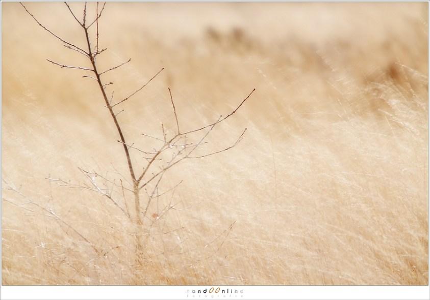 Telelens-landschappen op de heide