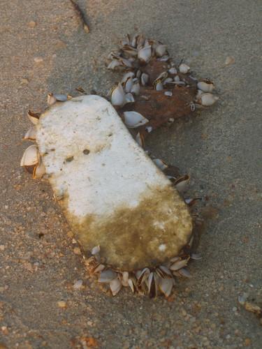 201402030080-shoe-barnacles
