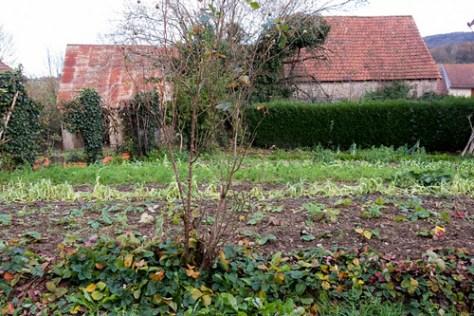 Veg garden in winter