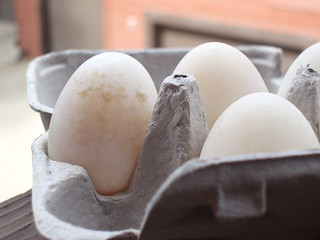 Food: Duck Eggs