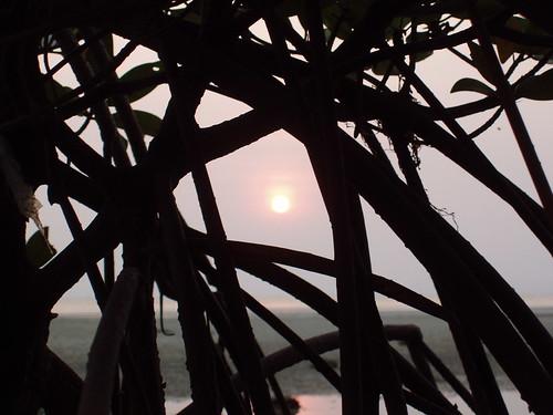 201102130501-mangrove-roots-sunset