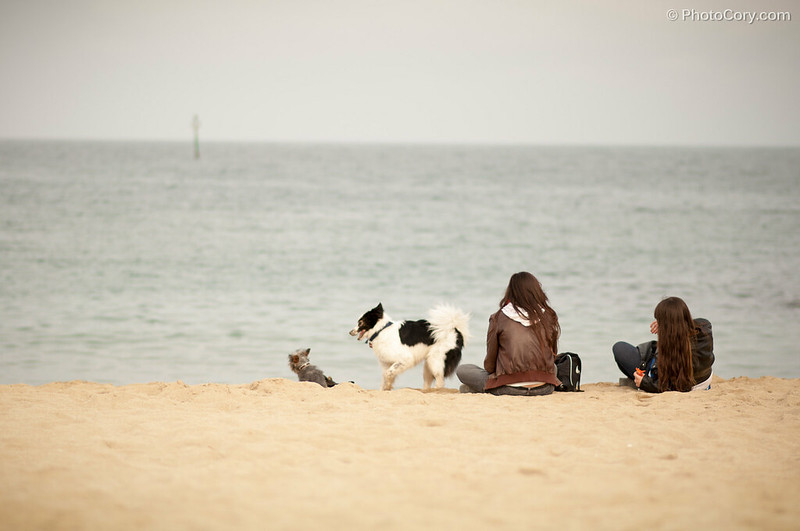 People and dogs at the beach in Barcelona
