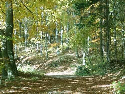 Waldweg_1 #holzvonhier