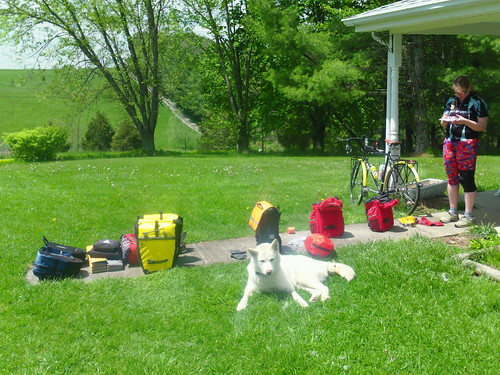 dog and bags out to dry
