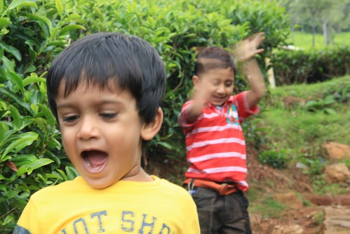 Playing in tea garden