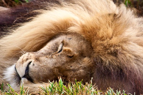 Let sleeping lions be by Richard Le Sauvage