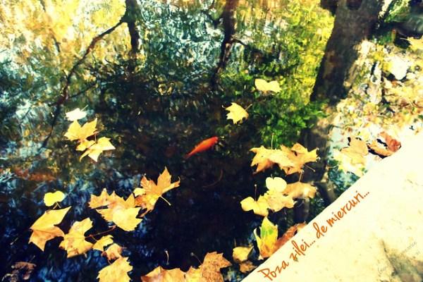 frunze pe lac si-un peste portocaliu