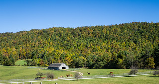 Pinnacle Mountain Farm