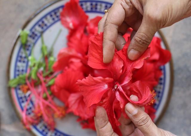 paticheri hibiscus flower syrup (5)