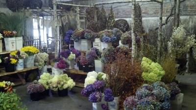 seattle flower market zcallas oregon coastal flowers