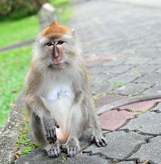 monkeys 23