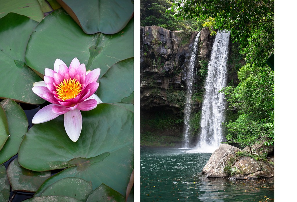 beautiful flowers and waterfall