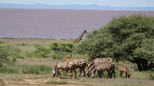 Wildlife at Lake Manyara
