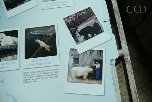 Pic in the middle shows Polar bear Elvis in his new home in ZOOM Gelsenkirchen...
