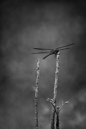 Free Nature BW by Rey Cuba