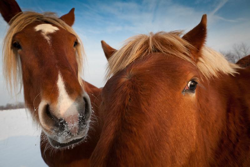 Day 37 _  Horses série