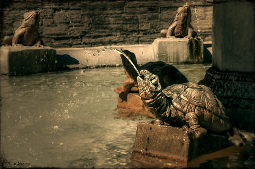 Image of a turtle fountain at Flagler College