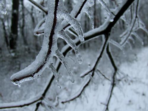 ice fangs 1