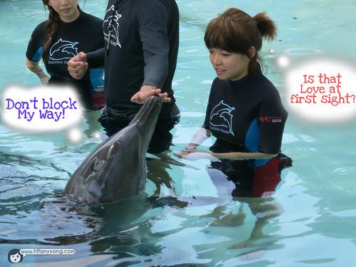 dolphin interaction program