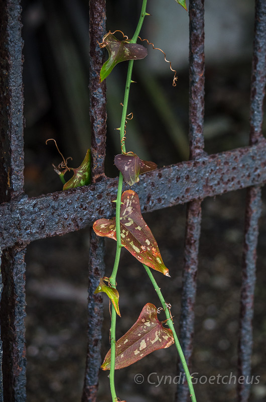 wabi sabi leaves