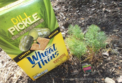Nabisco Limited Edition Dill Pickle Wheat Thins Dill