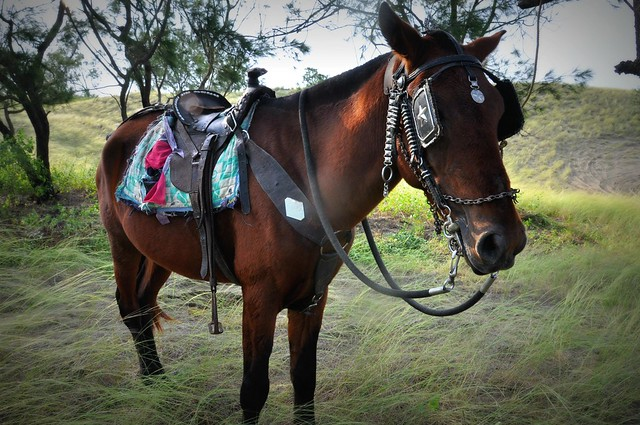 Horse in La Paz
