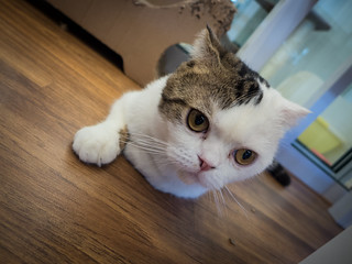 Purrfect_Cat_Cafe_Doll_Meat_21