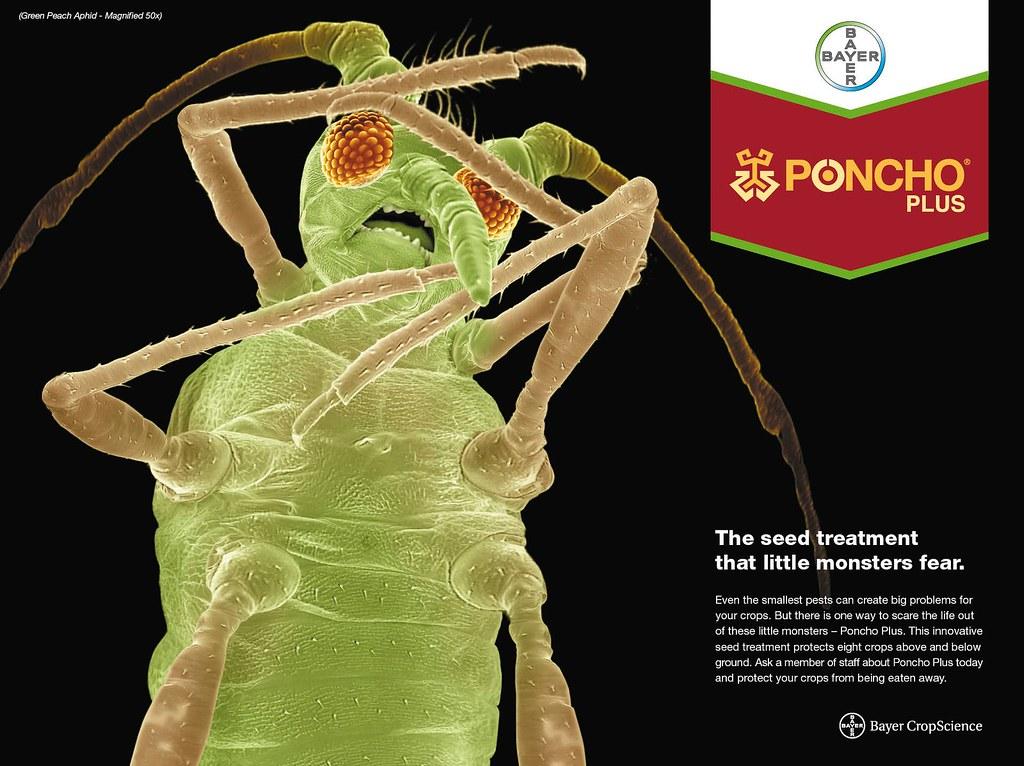 Poncho Plus - Green Peach Aphid