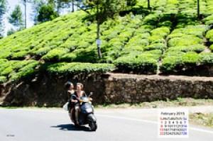 Munnar Tea Gardens