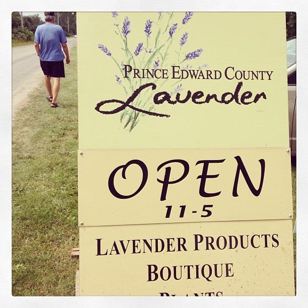 July 7 - where are you {Prince Edward County Lavender Festival} #fmsphotoaday #lavender #princeedwardcounty