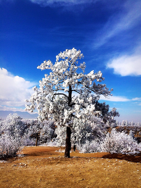 Picture from Palmer Park in Colorado Springs After A Ice Storm