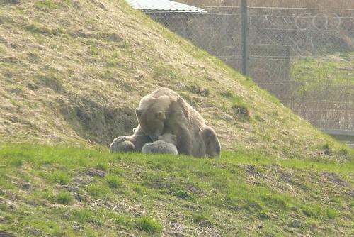 Ilka feeds her little ones...
