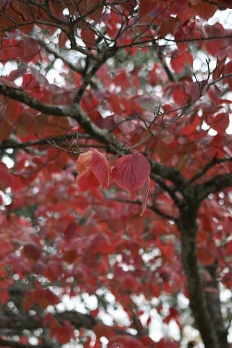 Fall by theadventuresofbeka