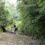 03 Viajefilos en Laos, Bolaven Plateau 17