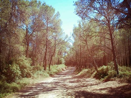 El sorolls del bosc mediterrani by Marc Lecha
