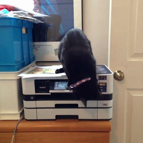 My Hacker Ninja Princess inspects our new printer. #cats #catsofinstagram #foodcatspens