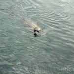 Oceanografic Miguel, focas 02