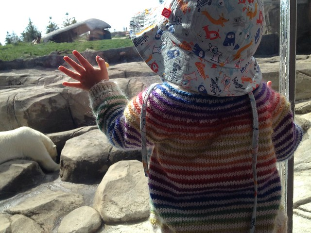 Watching polar bears, wearing babyStripes!