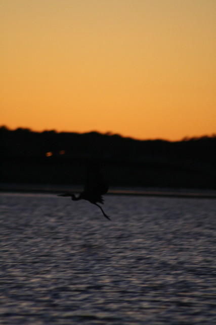 heron take-off