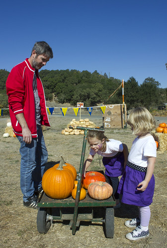 St. Helena FFA pumpkin patch