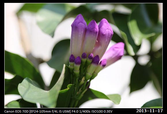 20131117_Flowers