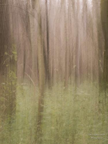 Wald mal unscharf