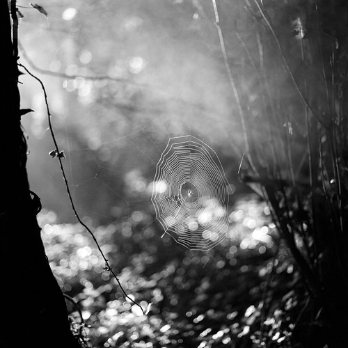 Walking into spiderwebs by tubb