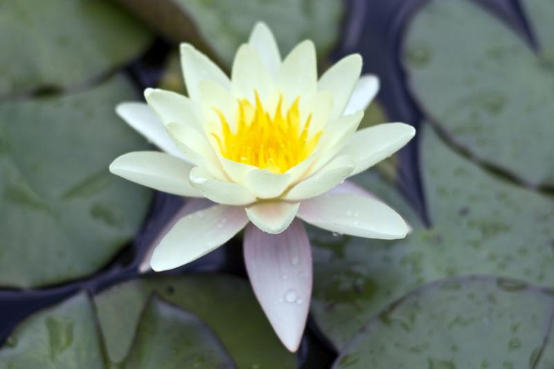 Flower 2013