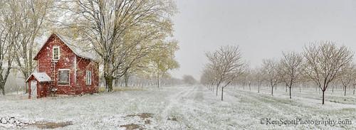 Cherry Orchard ... spring snow