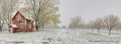 Cherry Orchard ... spring snow